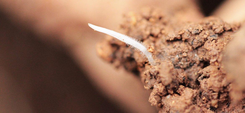 Bodenstruktur-
