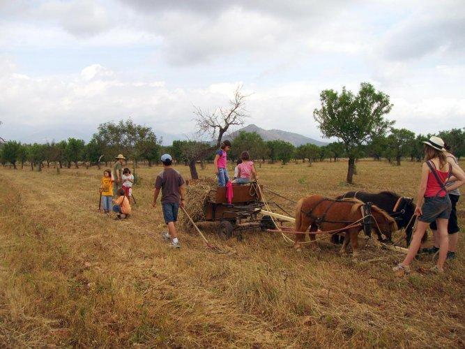 Ponyarbeit-mit-Kindern