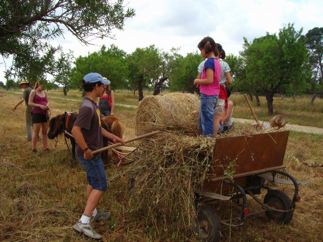 Kindergruppe-mit-Ponys